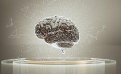 哺乳類脳といわれる大脳辺縁系について~言語聴覚士というお仕事~
