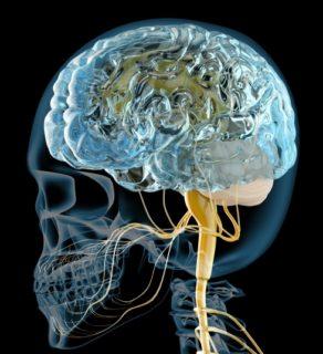 人間脳といわれる大脳新皮質について~言語聴覚士のお仕事~